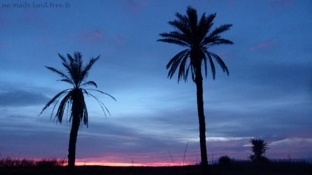 Palmier nuit