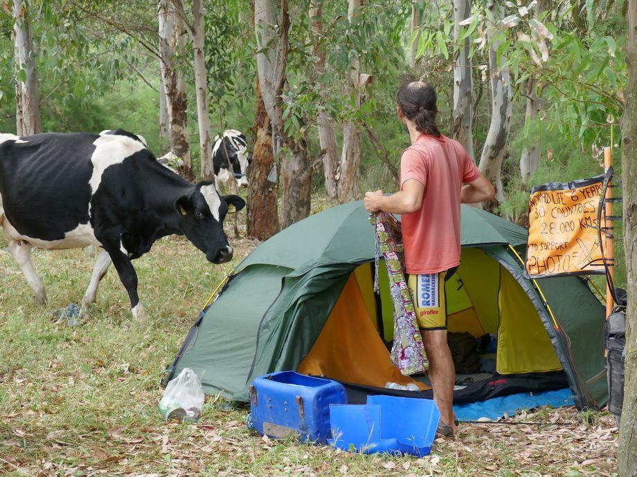 Tente vache